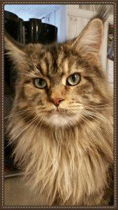 Mira, bild på mamman till kattungarna.